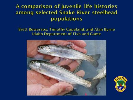  Present in Snake, Clearwater, and Salmon River drainages  Provide valuable fishery  Well documented variation in ocean life history (A vs B run) 