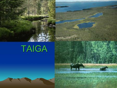 TAIGA. About Taiga's climates For most of the year the is dark cold and covered in snow and ice. During the short periods of warmth in the spring and.