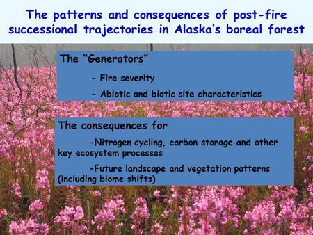 "The patterns and consequences of post-fire successional trajectories in Alaska's boreal forest The ""Generators"" - Fire severity - Abiotic and biotic site."