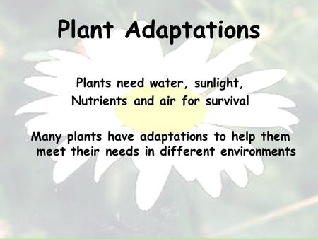 Plant Adaptations Plants need water, sunlight, Nutrients and air for survival Many plants have adaptations to help them meet their needs in different environments.