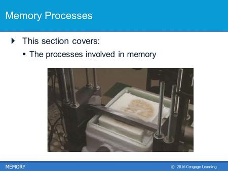 © 2016 Cengage Learning. MEMORY Memory Processes  This section covers:  The processes involved in memory.