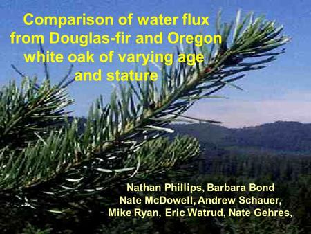 Comparison of water flux from Douglas-fir and Oregon white oak of varying age and stature Nathan Phillips, Barbara Bond Nate McDowell, Andrew Schauer,