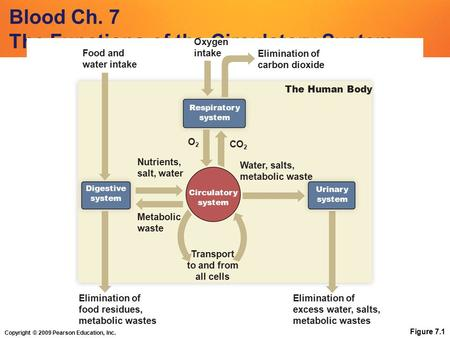 Copyright © 2009 Pearson Education, Inc. Blood Ch. 7 The Functions of the Circulatory System Figure 7.1 Circulatory system Transport to and from all cells.