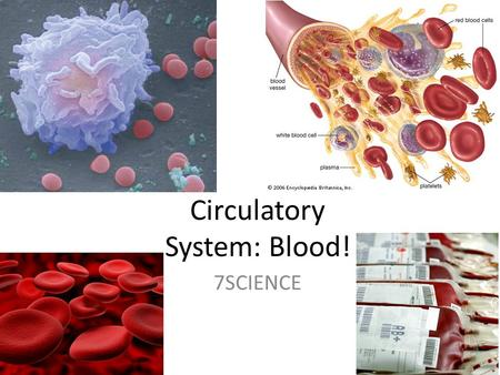 Circulatory System: Blood! 7SCIENCE. What is blood? Blood makes up around 8% of your body weight (5L!) Consists of: – Cells and liquid Blood has many.