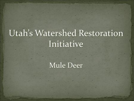 Utah's Watershed Restoration Initiative Mule Deer.