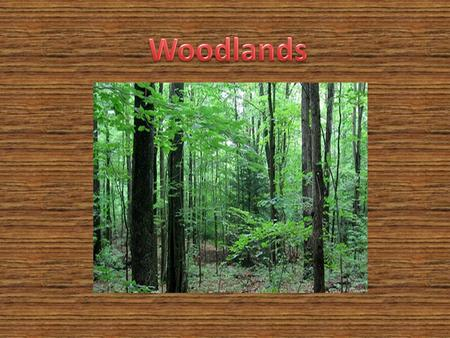 Our habitat is the woodlands. Coniferous forests have evergreen trees. Conifers keep their needle like leaves all year. The seeds fall out in warm weather.