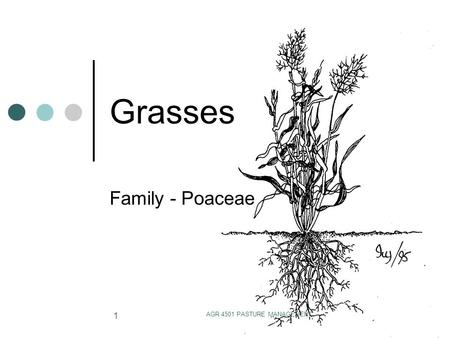AGR 4501 PASTURE MANAGEMENT 1 Grasses Family - Poaceae.