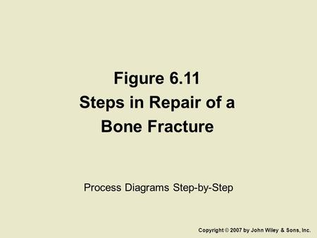 Figure 6.11 Steps in Repair of a Bone Fracture Process Diagrams Step-by-Step Copyright © 2007 by John Wiley & Sons, Inc.