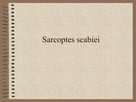 mikroskop sarcoptes scabiei