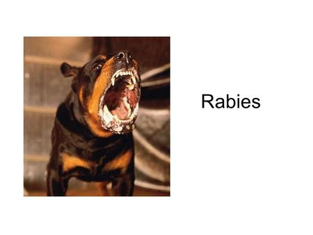 Rabies. The infectious path of Rabies virus Just the Facts Possible in any mammal. Occurs mostly in wild animals like raccoons, skunks, bats, and foxes.