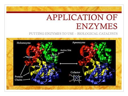 APPLICATION OF ENZYMES PUTTING ENZYMES TO USE – BIOLOGICAL CATALYSTS.