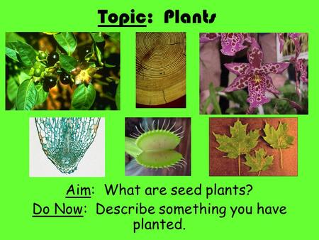 Topic: Plants Aim: What are seed plants? Do Now: Describe something you have planted.