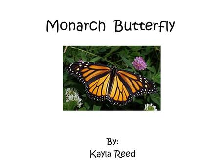 Monarch Butterfly By: Kayla Reed. Characteristics The Monarch Butterfly is an insect. And it is cold blooded. They also have orange and black wings. And.