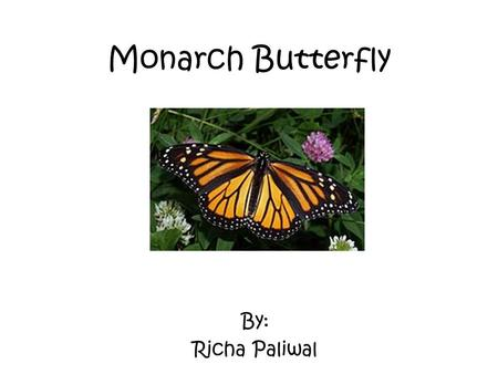 Monarch Butterfly By: Richa Paliwal. Characteristics Monarchs are insects. They are invertebrates. They are cold blooded. They have orange and black wing.