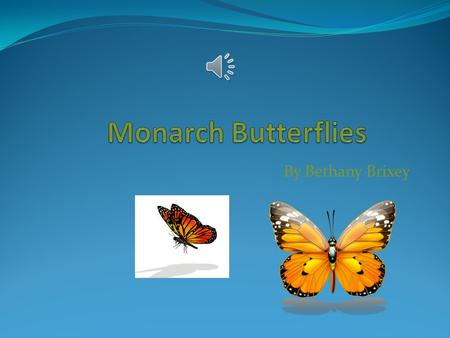 By Bethany Brixey Body Monarch butterflies are insects. The have orange, black, and white wings. The wing span of a Monarch butterfly is 4 inches long,