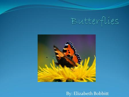 By: Elizabeth Bobbitt. INTRODUCTION: WHAT HAS COLORFUL SCALY WINGs AND IS AN INSECT ? A BUTTERFLY ! 1.