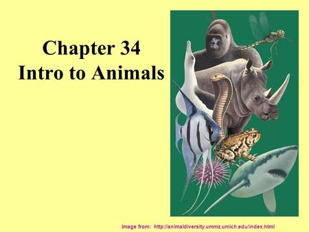 Chapter 34 Intro to Animals Image from: