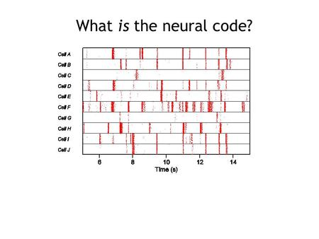What is the neural code?. Alan Litke, UCSD What is the neural code?