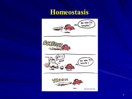 1 Homeostasis. 2 Homeostasis Homeostasis is the maintenance of a dynamic consistency of the body's internal environment. Normal functional activities.