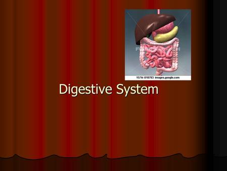 Digestive System. Function – to break food down into simpler molecules that can be absorbed & used by cells Function – to break food down into simpler.