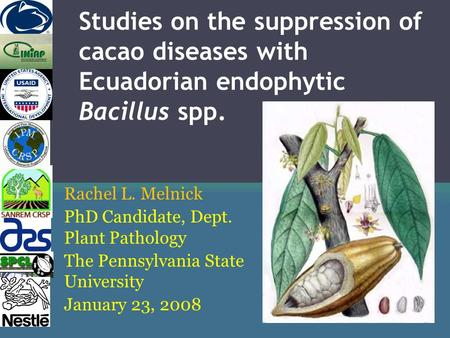 Studies on the suppression of cacao diseases with Ecuadorian endophytic Bacillus spp. Rachel L. Melnick PhD Candidate, Dept. Plant Pathology The Pennsylvania.