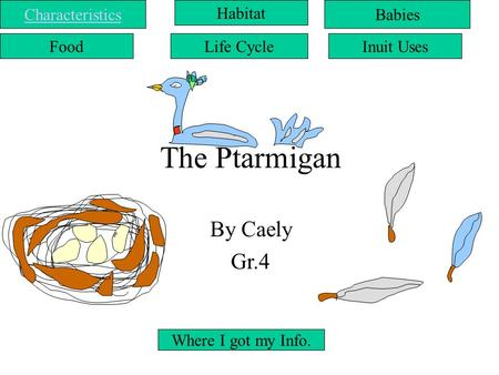 The Ptarmigan By Caely Gr.4 Life CycleInuit Uses Where I got my Info. BabiesCharacteristics Food Habitat.