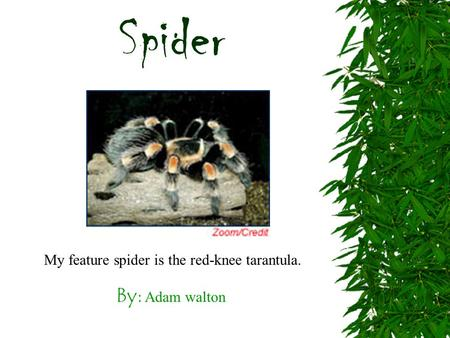By: Adam walton My feature spider is the red-knee tarantula. Spider.