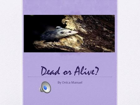 Dead or Alive? By Onica Manuel An Opossums Wildlife. Sometimes an opossum meets a predator. It shows its 50 teeth to scare the predator away. An opossums.