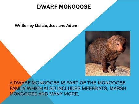 Dwarf mongoose Written by Maisie, Jess and Adam.