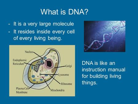 What is DNA? -It is a very large molecule -It resides inside every cell of every living being. DNA is like an instruction manual for building living things.