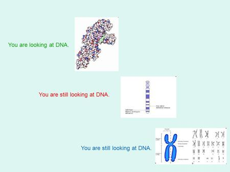 You are looking at DNA. You are still looking at DNA.