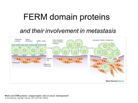 FERM domain proteins and their involvement in metastasis Merlin and ERM proteins: unappreciated roles in cancer development? A McClatchey Nat Rev Cancer.