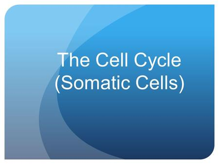 The Cell Cycle (Somatic Cells). Vocabulary Interphase Prophase Metaphase Anaphase Telophase Cytokinesis.