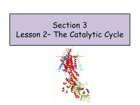 Section 3 Lesson 2– The Catalytic Cycle. What do enzymes do? Enzymes lower the activation energy E a required for a reaction to occur.