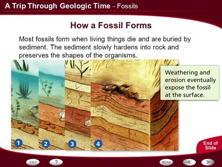 How a Fossil Forms - Fossils