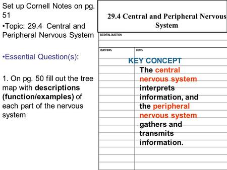 29.4 Central and Peripheral Nervous Systems Set up Cornell Notes on pg. 51 Topic: 29.4 Central and Peripheral Nervous System Essential Question(s): 1.