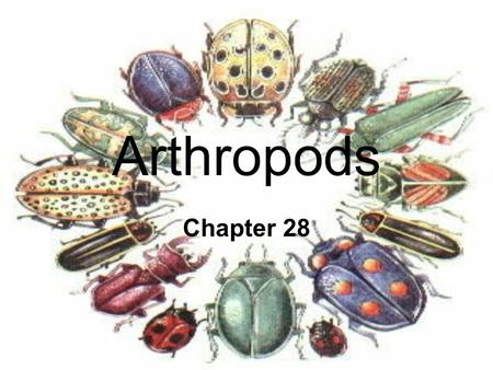 Arthropods Chapter 28. Arthropods include: Insects, Arachnids, Crustaceans, Centipedes.