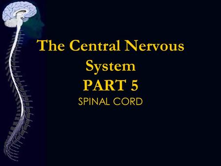 The Central Nervous System PART 5 SPINAL CORD. CNS.