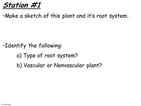 Station #1 Make a sketch of this plant and it's root system. Identify the following: a) Type of root system? b) Vascular or Nonvascular plant? PlantLab0708.ppt.