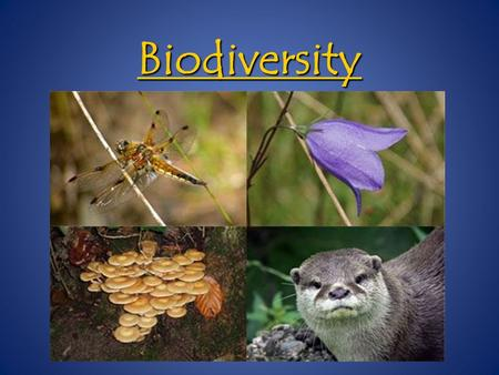 Biodiversity. Bio = Life Bio = Life Diverse = consisting of different things Diverse = consisting of different things Refers to the variety of species.