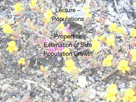 Lecture – Populations Properties Estimation of Size Population Growth.