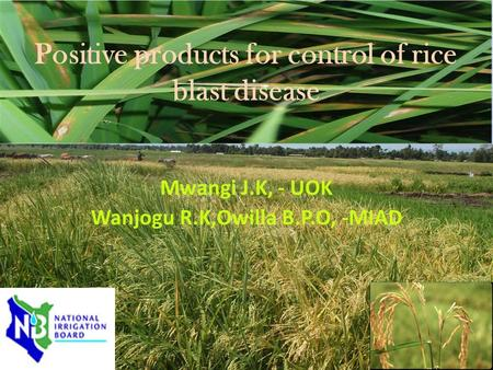 Positive products for control of rice blast disease Mwangi J.K, - UOK Wanjogu R.K,Owilla B.P.O, -MIAD.