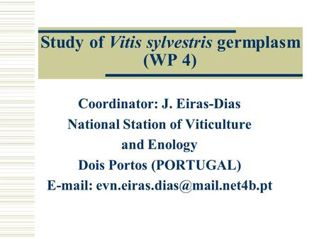Study of Vitis sylvestris germplasm (WP 4) Coordinator: J. Eiras-Dias National Station of Viticulture and Enology Dois Portos (PORTUGAL)