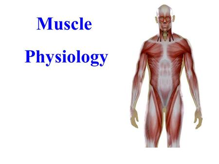Muscle Physiology. Functions of Muscular Tissue Producing Body Movements Stabilizing Joints Maintaining Posture Producing heat Properties of Muscular.