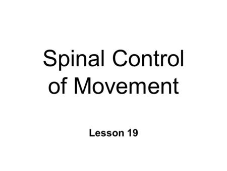 Spinal Control of Movement Lesson 19. Spinal Mechanisms Of Movement n Ventral Spinal Cord l motor neurons l Striate muscle l voluntary movement & reflexes.