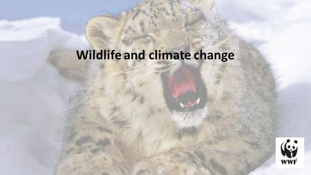 Wildlife and climate change