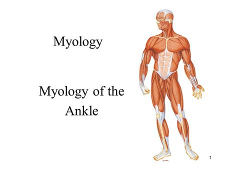 Myology Myology of the Ankle.