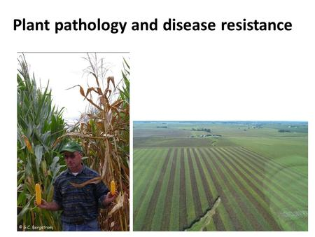 Plant pathology and disease resistance. Who is Alison Robertson?