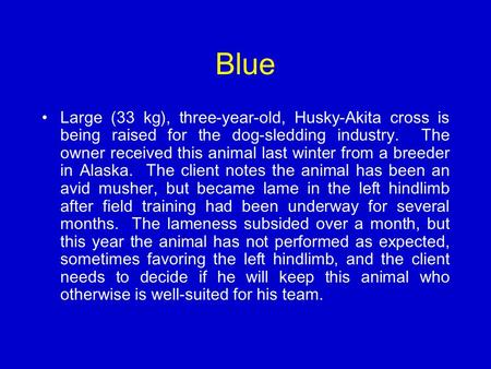 Blue Large (33 kg), three-year-old, Husky-Akita cross is being raised for the dog-sledding industry. The owner received this animal last winter from a.