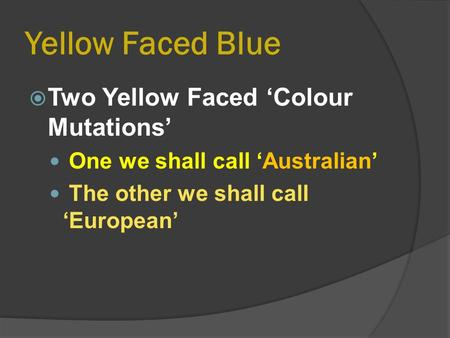 Yellow Faced Blue  Two Yellow Faced 'Colour Mutations' One we shall call 'Australian' The other we shall call 'European'